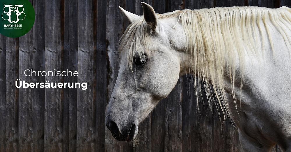 Pferde Gesundheit und Krankheit