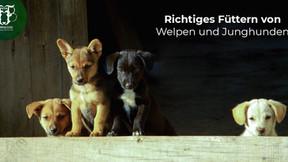 Welpen und Junghunde bedarfsgerecht füttern