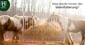 Selen beim Pferd: Mangel oder Überschuss?