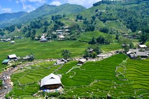 Fields in Sapa Vietnam