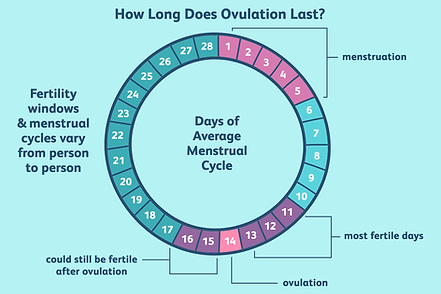 1960235-how-long-does-ovulation-last-01-