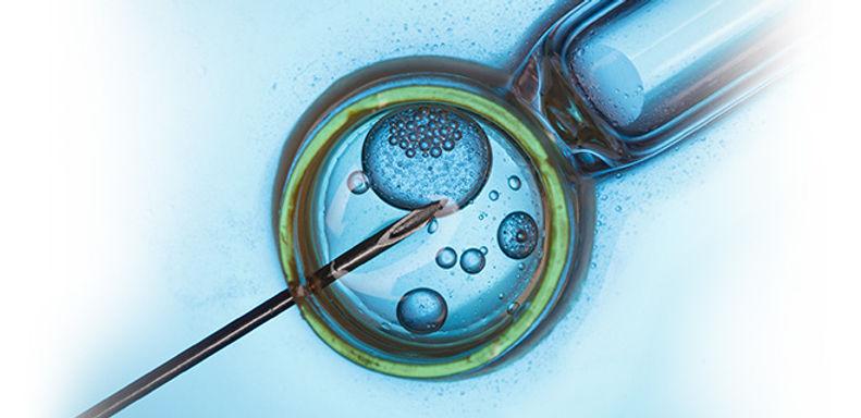 blastocyst-culture.jpg