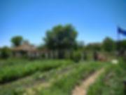 Native Food Farm 6-12.jpg