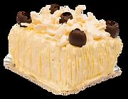 tortas neca bicolor