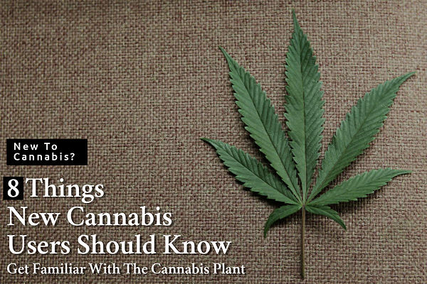 8 Things New Cannabis Users Should Know,