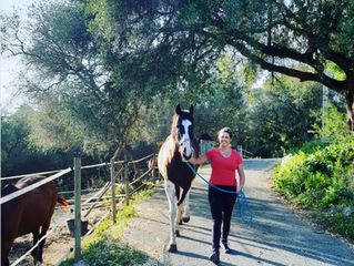 Equine Facilitated Psychotherapy and Learning