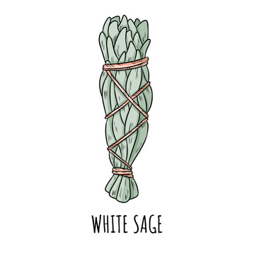 The Basics of Sage Smudging