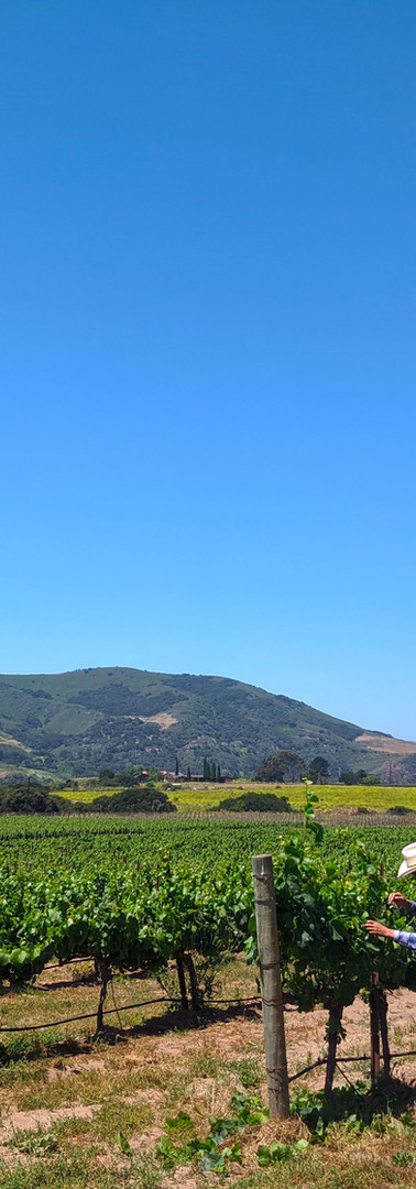 Lafond Vineyards in the Sta. Rita Hills