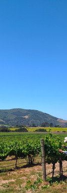 Lafond Winery in the Sta. Rita Hills