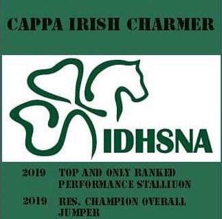 Cappa Irish Charmer - IDHSNA's TOP Irish Draught Performance Stallion 2019