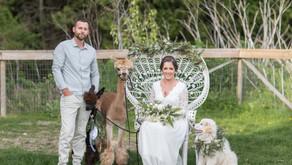 Alpaca Elopement Inspiration in Langley