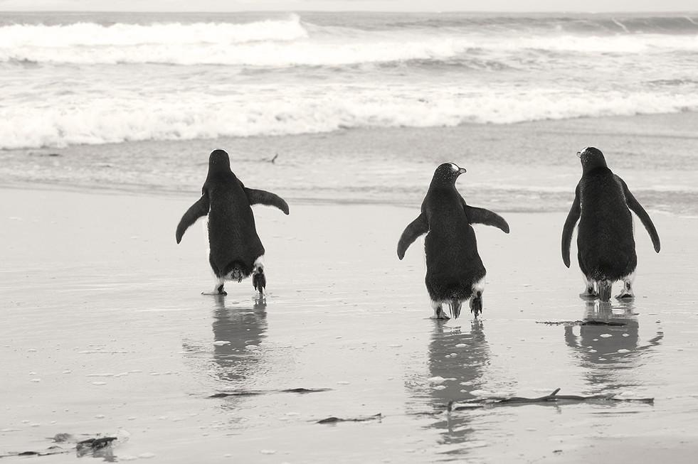 pingüinos03_filtro_web.jpg