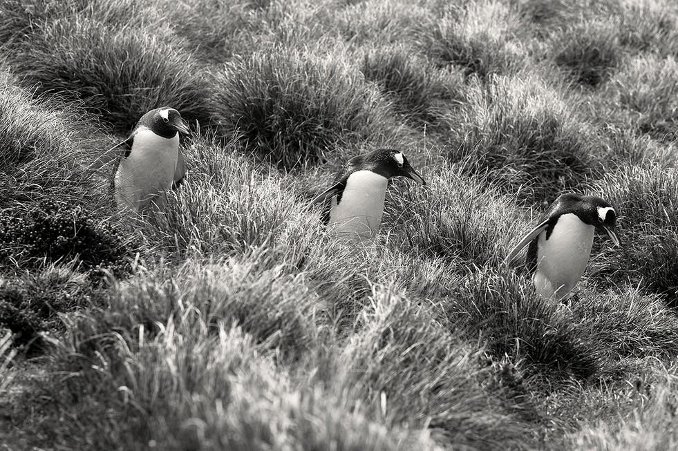 pingüinos01_filtro_web.jpg