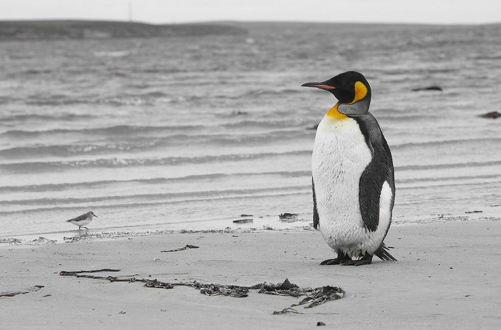 pingüinos06web.jpg