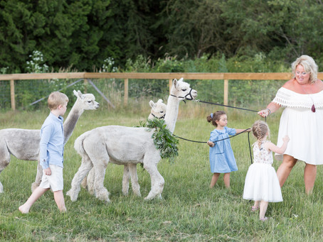 Grandparents, grandkids and Alpaca fur babies - Langley Family Session