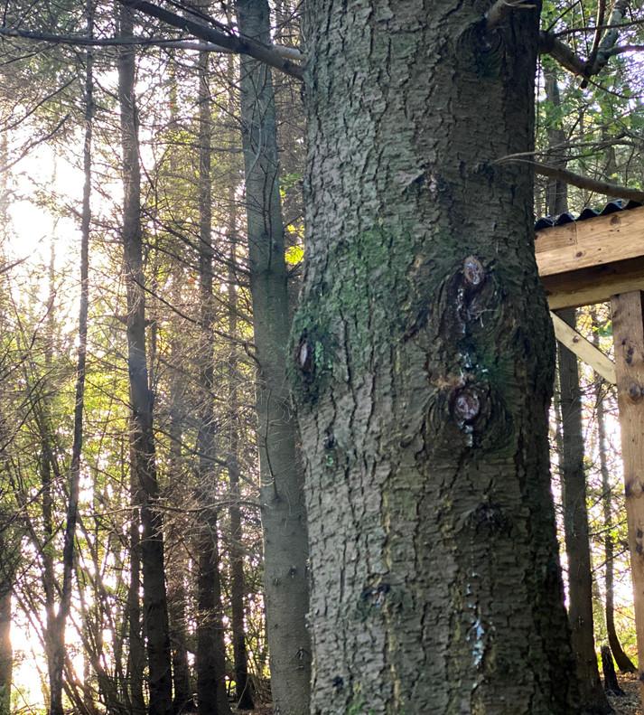 23 The Woods surround The Deer Meadow.jp