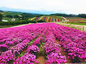 HokkaidoPS, kunang travel, muslim friend