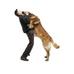 Como evitar que o cão pule nas pessoas