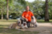 Adestramento de cães Rio de janeiro