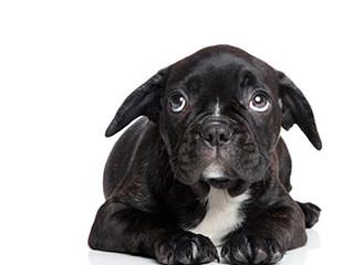 Mitos sobre comportamento dos cães