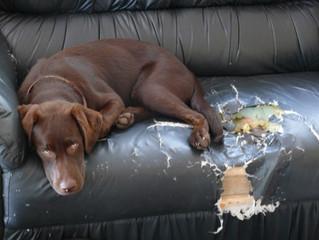 5 erros que as pessoas cometem que desequilibram os cães.