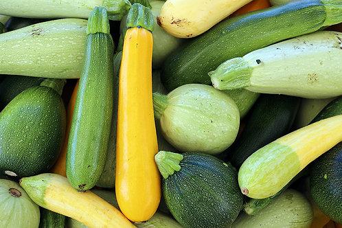 Squash -Zucchini