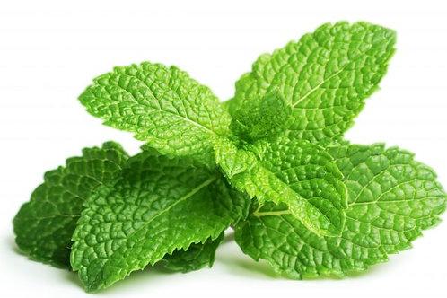 Herb - Organic Mint