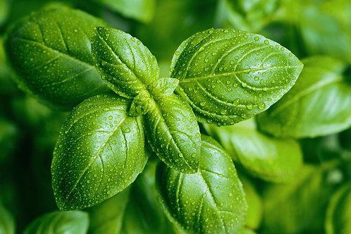 Herb - Organic Basil