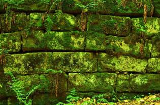 Reprodução 021-Pedras com limo.jpg