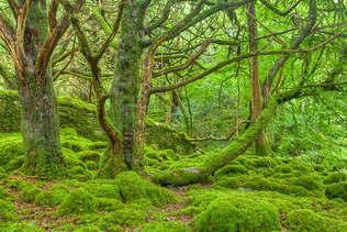 Floresta Natureza 404.jpg