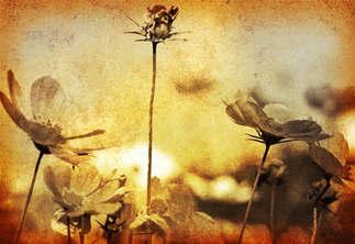 Floral 029.jpg
