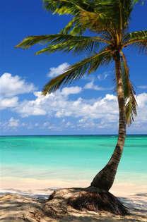Praia 108-Palmeira tropical.jpg