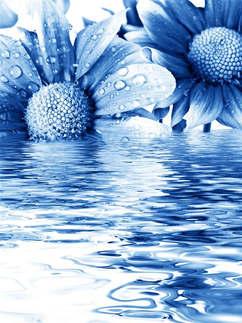Floral 043-design.jpg