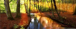 Floresta Natureza 004.jpg