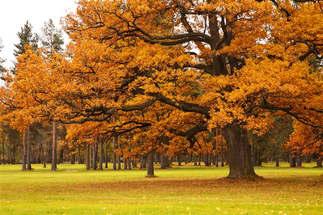 Floresta Natureza 400.jpg