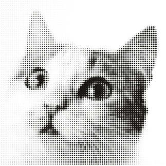 Artes visuais 081-Efeito gato preto e branco.jpg