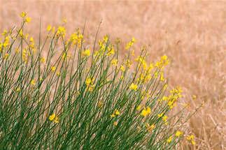 Floral 030.jpg