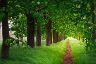 Floresta Natureza 239.jpg