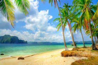 Praia 136-Palmeiras tropicais.jpg