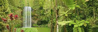 Floresta Natureza 301.jpg