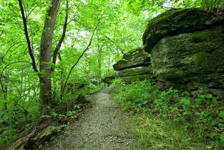 Floresta Natureza 074.jpg