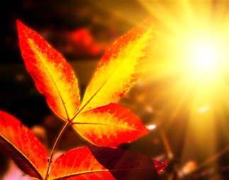 Natureza 023-Raios de sol_NOVO.jpg