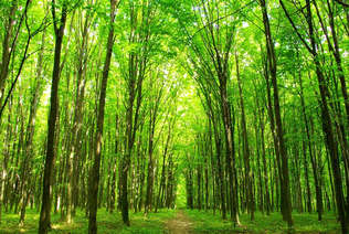Floresta Natureza 254.jpg