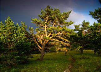 Natureza 075-Raio de sol na arvore.jpg