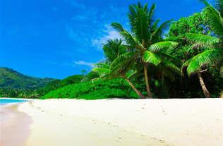 Praia 035-Palmeiras e areia branca.jpg