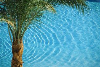 Praia 107-Palmeira e agua transparente.jpg