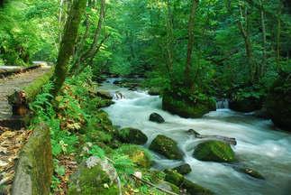 Natureza 049-Riacho com pedras.jpg