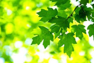 Natureza 061-Platano.jpg