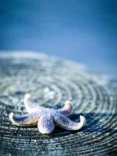 Natureza 060-Estrela do mar.jpg