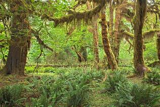 Floresta Natureza 373.jpg